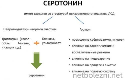 Роль серотонина в организме