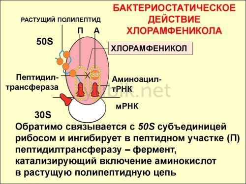 Механизм действия хлорамфеникола