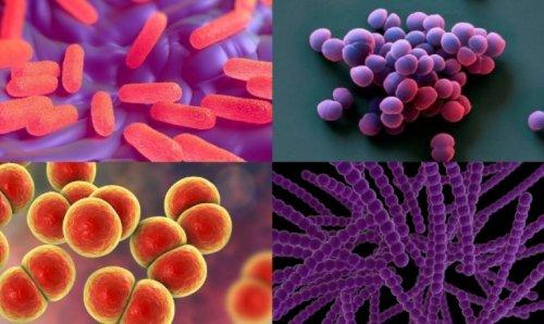 Вредные для человека микроорганизмы