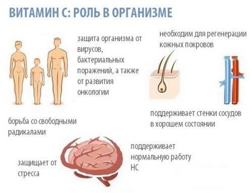 Роль витамина С в организме